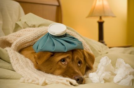 cause of dog vomiting