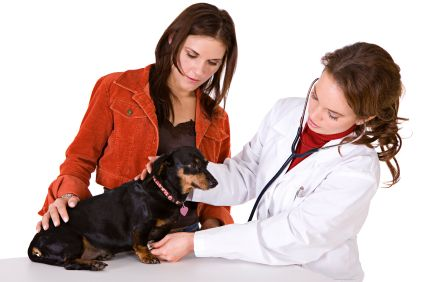 Rabies in Dogs, Pros Cons of Euthanasia, Nerve Damage Symptoms