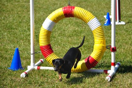dog agility equipment plans