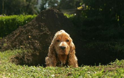 Stop dogs digging holes, how to keep domestic dogs from digging under fences
