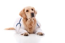 Bronchitis in Dogs – Its symptoms, causes & treatment