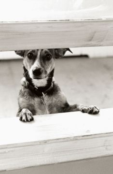 Dog Separation Anxiety, How to Train a Puppy, Separation Anxiety in Dogs