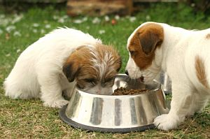 The Best Dry Dog Food: A Complete Guide