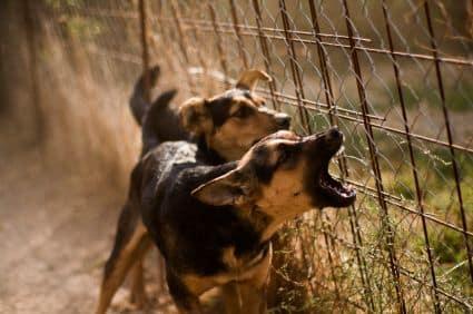 stopping neighbors dog barking
