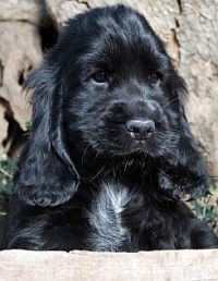 Puppy Training Tips, Potty Training a Puppy, House Training a Puppy