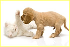How to Train a Puppy, Potty Training a Puppy, House Training a Puppy