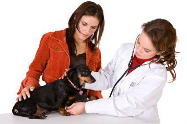 Dog Owners Guide To Congestive Heart Failure in Dogs