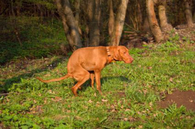 The Dog Owners Guide To Constipation in Dogs