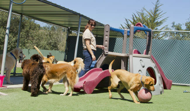 Will Boarding My Dog at a Kennel Stress Him Out?