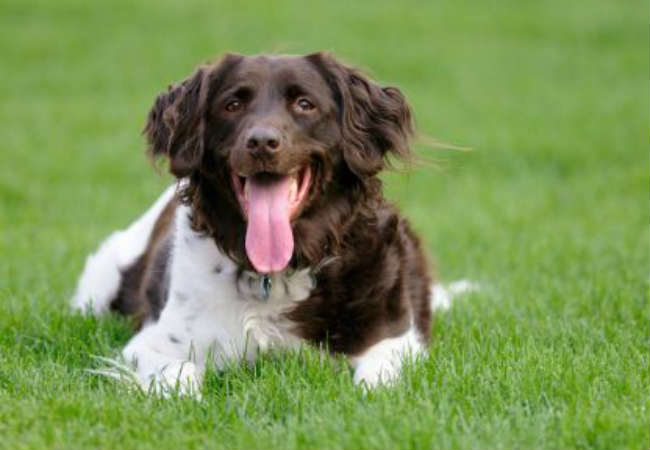 Dog Owners Guide To Excessive Panting In Dogs