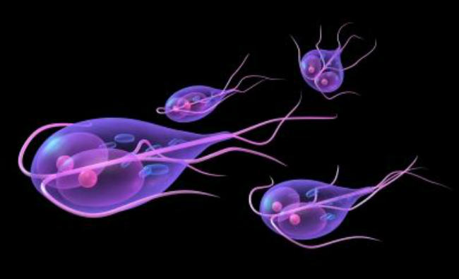 The Dog Owner's Guide To Giardia in Dogs