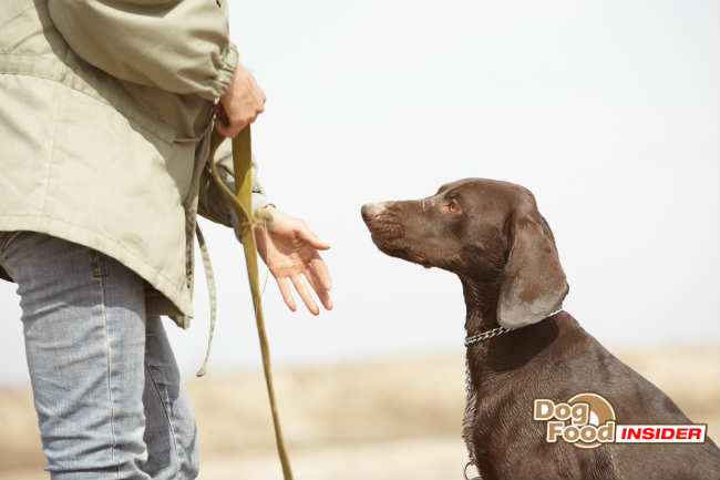 The Dog Owners Guide to Colitis in Dogs & Puppies