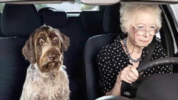 The Dog Owners Guide Dog Motion Sickness