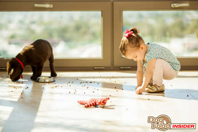 Dog Behavior Question – My 1yr old Labrador snapped at me, and we are about to have a new baby