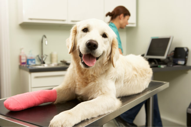 The Top 10 Dog Injuries and How to Prevent Them