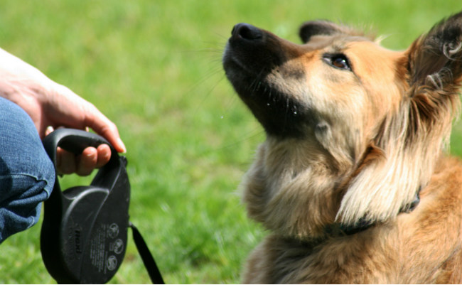 5 Basic Commands You Should Teach Your Dog First