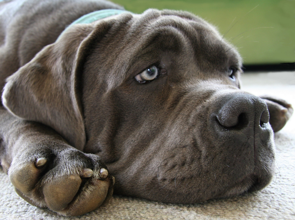 Diagnosing Liver Disease in Dogs
