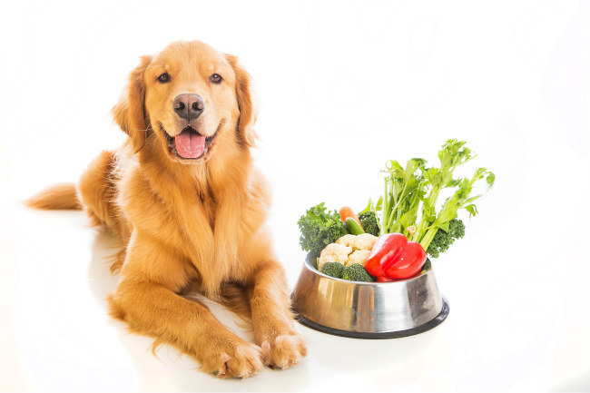 How Proper Diet Can Prevent Disease In Our Pets
