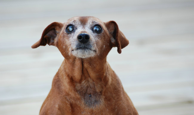 Essential Grooming Tips for Older Dogs