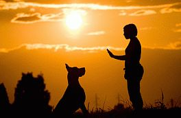 Dog Behavior Patterns, Free Vet Advice, Dog Behavior Questions
