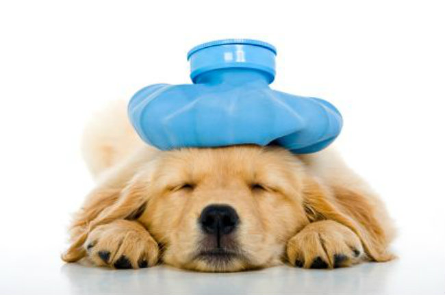 Symptoms of Illness in Dogs, Definition of Dog Illnesses & Diagnosis, Canine