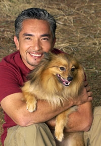 Cesar Millan Dog Whisperer TV Show, Psychology Motivation