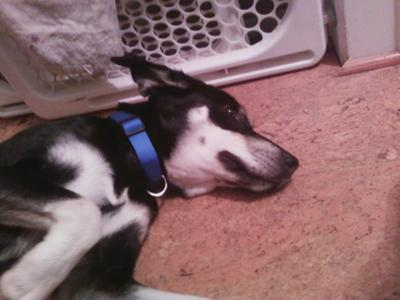 Crate Training an Older Dog – My Dog won't Get in Her Crate Anymore!