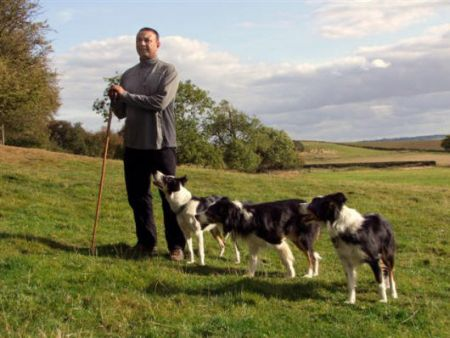 Dog Training Interview Nij Vyas, Border Collie Photos, Sheepdog Trials
