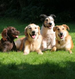 Choosing a Dog, Best Dog Breed for Children, Choosing a Dog for Family,
