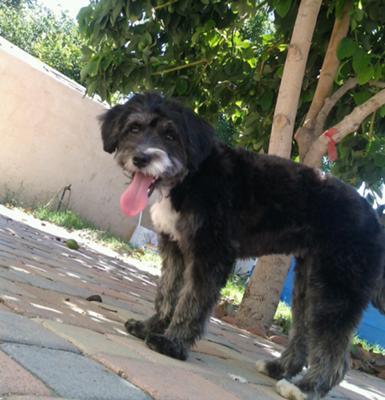Lexxie my little Maltese