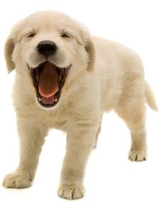 Puppy Behavior, Free Puppy Training Tips, Puppy Training Biting