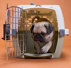 Crate Training a Dog, Crate Training a Puppy, Crate Training Puppies