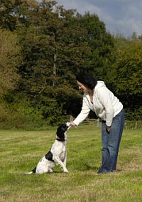 Dog Barking Control, How to Stop Dog Barking, Dog Barking Training