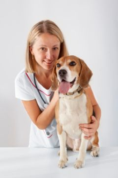 A female vet caring for a dog