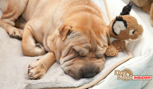 The Dog Owners Guide To Canine Pyoderma