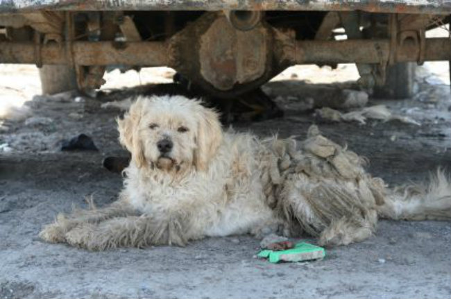 The Dog Owners Guide To Canine Seborrhea | Dog Skin & Coat ... Oily Seborrhea In Dogs Treatment