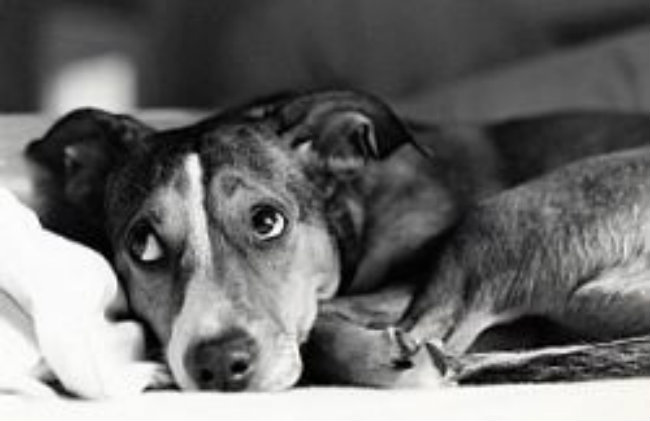 4 Tips for Dealing with the Loss of Your Dog