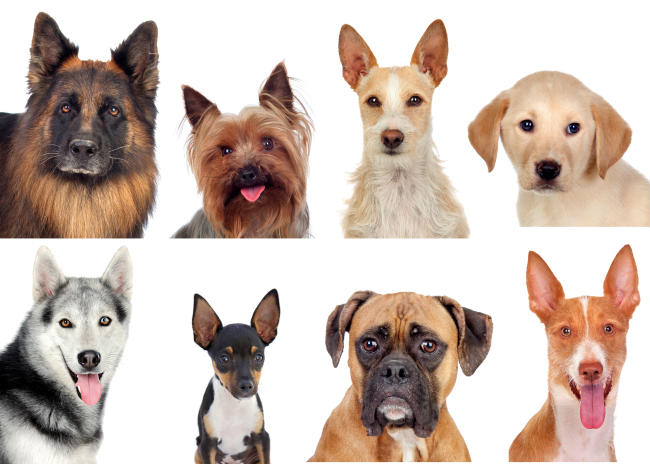 The Dog Owners Guide to Canine Mast Cell Cancer