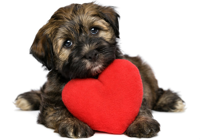 Heartworm in Dogs – The Dog Owners Guide