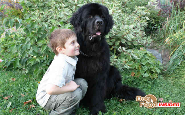List of Large Dog Breeds, Extra Large Breed Dogs, Largest