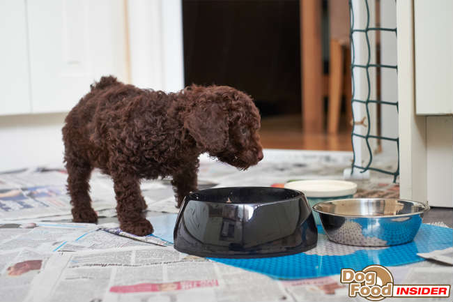 Potty Training a Puppy – I live in a first floor flat.. How can I train my puppy to eventually go to the toilet outside?