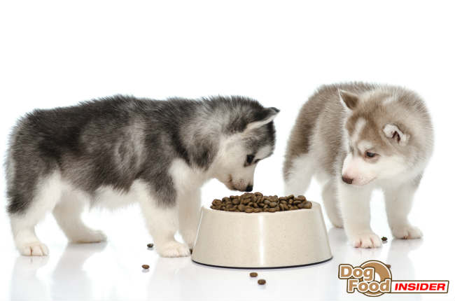 Recipes for Homemade Dog Foods, How to Make Dog Food, Making Your Own Dog Food