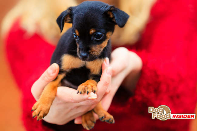 Choosing a Puppy Quiz, Best Dog Breed for Children, Choosing a Dog for Family
