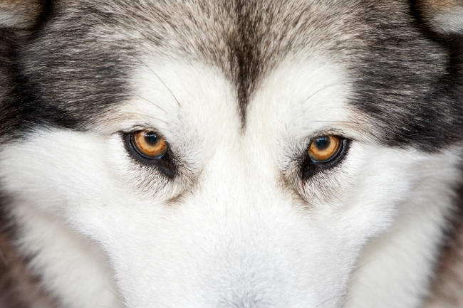 A Dog Owner's Guide to Canine Dry Eye