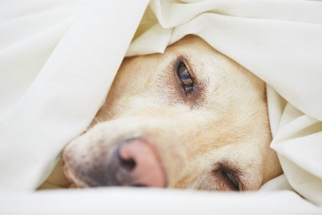 Dog Stroke Symptoms