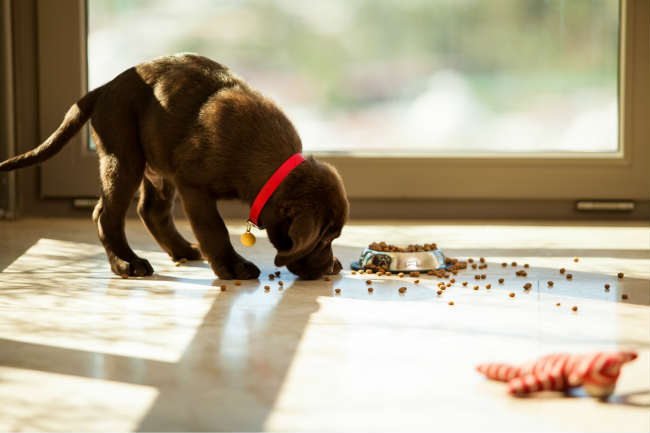 Canine Digestion: A guide to the digestive system