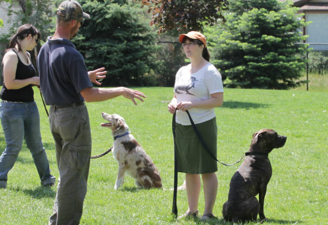 How to Find a High Quality Dog Trainer