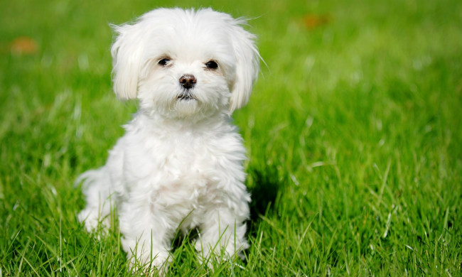 6 Ways to Keep Your Small Dog Safe